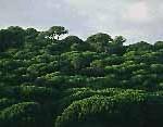 Os números da Floresta Portuguesa1