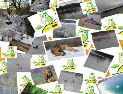 painel biodiversidade (2)